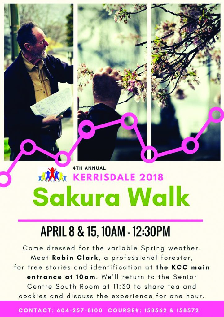 Sakura Tree Walk Tours 16+ yrs Come dressed for the variable Spring weather. Meet Robin Clark, a professional forester, for sakura tree history and identification at the KCC main entrance at 10am.We'll return to the Senior Centre South Room at 11:30am to share tea and discuss the experience for one hour. Free event but Pre-registration is required and a waiver form will need to be completed. Su 10:00 AM-12:30 PM Apr 8 158562 Free/Registration Required Su 10:00 AM-12:30 PM Apr 15 158572 Free/Registration Required